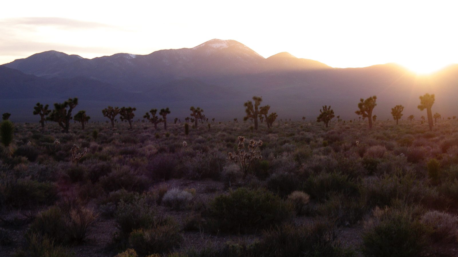 Header Image - The Joshua Tree Genome Project